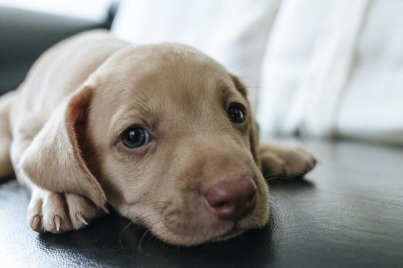 ¿Es obligatorio asegurar a tu perro?