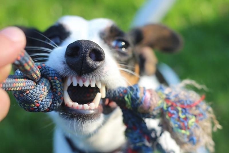Los imprevistos causados por los perros en números