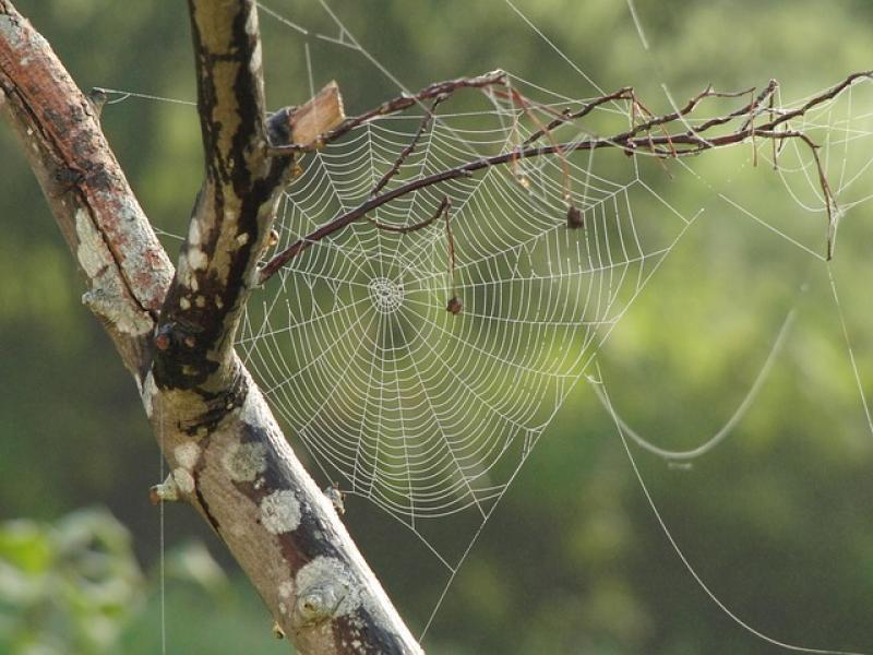 Las arañas (en teoría) se podrían comer a todos los humanos en menos de un año