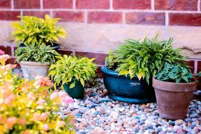 Cuidar las plantas en invierno
