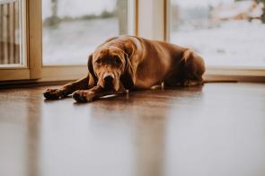 6 razones por las que hay que asegurar a tu mascota