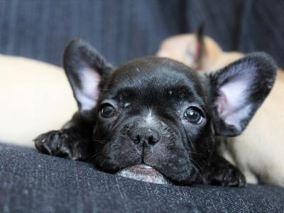 ¿Qué cubre el seguro de hogar para los animales de compañía?