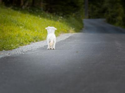 ¿Por qué aumenta el abandono de mascotas?